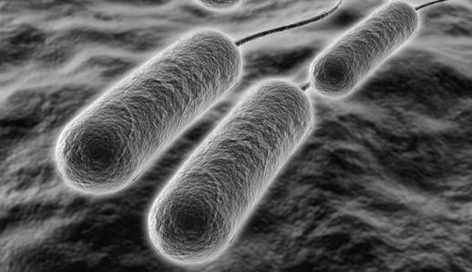 bacteria_estomacal